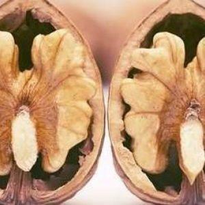 8 Безперечних корисних властивостей волоських горіхів для волосся, шкіри та здоров`я