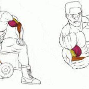 Базові вправи з гантелями
