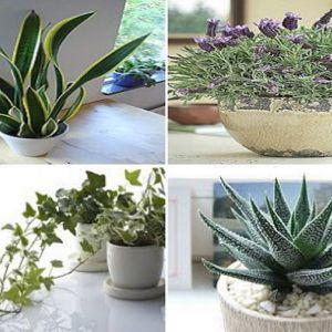 Ці 4 рослини в вашій спальні вилікують безсоння і проблеми зі сном