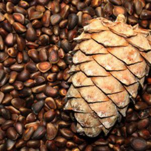 Кедрові горіхи: калорійність на 100 грам