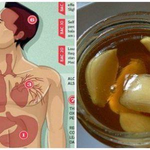 З`їдайте часник і мед на порожній шлунок. Через тиждень ваш організм відновиться вилікуватися від багатьох захворювань!