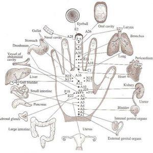 Су-джок терапія: лікувати себе без голок і таблеток