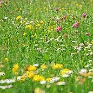 Трави для обміну речовин
