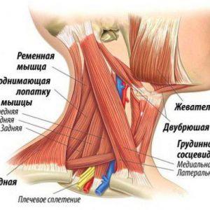 Вправи йоги, які допоможуть при болю в шиї