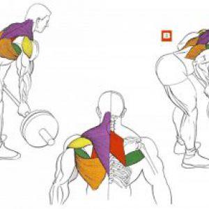 Вправи на найширші м`язи спини, турнік, підтягування
